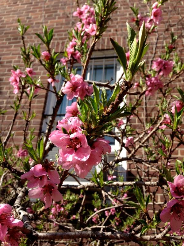 Spring-new-york