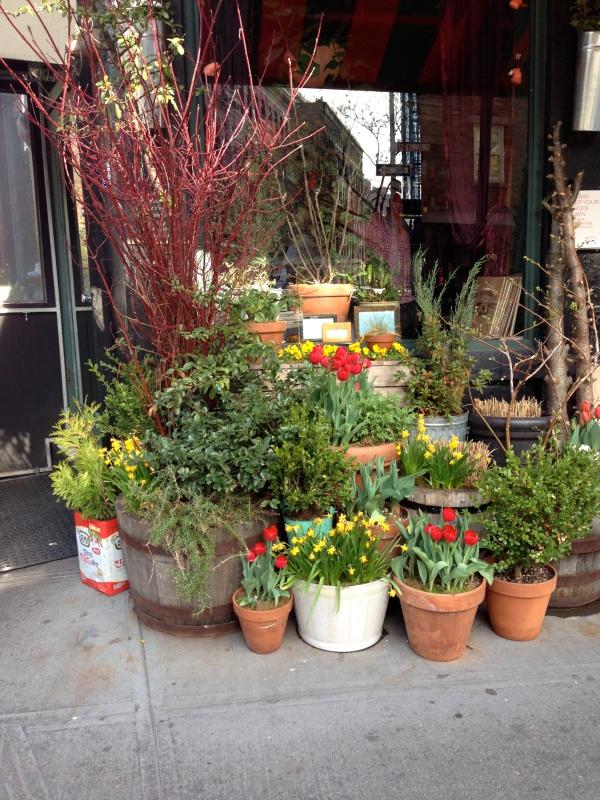 spring-tulips-new-york