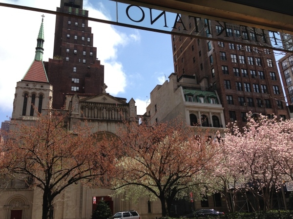 cherry-blossoms-park-avenue